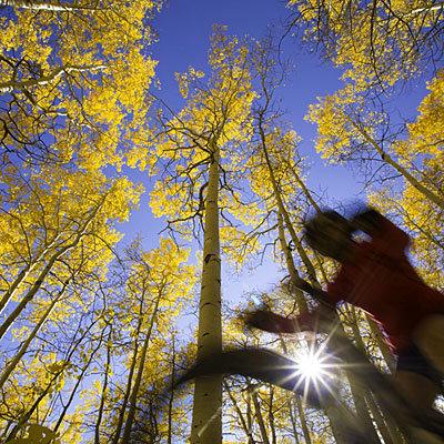 fall-tree-bicycle