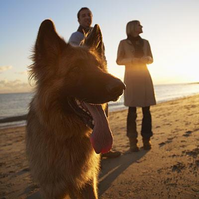 walk-dog-sunset