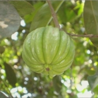 Boost Your Weight Loss With Garcinia Cambogia