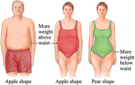 Belly fat and body shape
